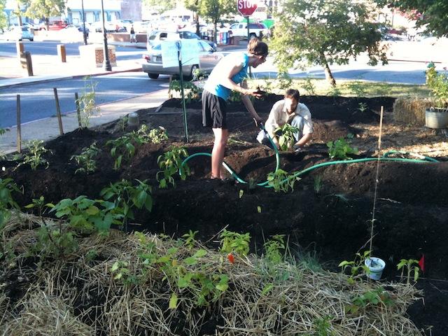 City Dock Gardeners