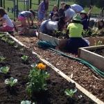 Park Elementary School Garden