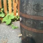 Rain Barrel of Annapolis