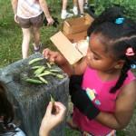 Shady Side Elementary School Harvest Party