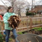 Fall Work Party at City Dock Community Garden