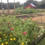 HF gardens and barn